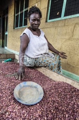 A lady sorting bean seeds at the school kitchen