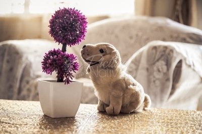 A puppy doll and an artificial flower