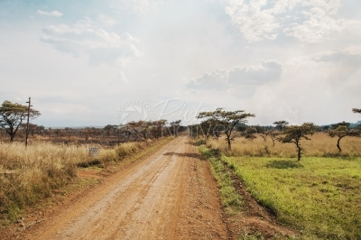African savannah vegetation.