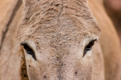 Close up of a donkey