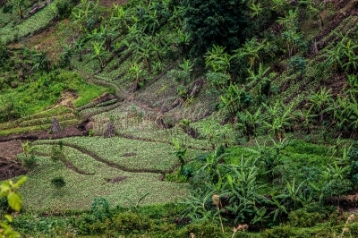Crop gardens in a hilly area