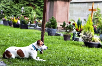Dog laying in the cemetery