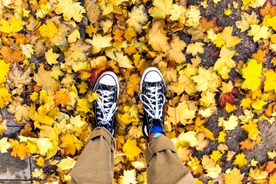Legs standing on Maple leaves during Autumn
