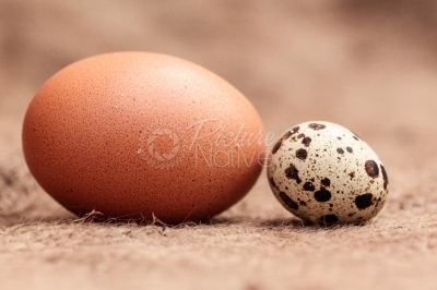 Quail egg and chicken egg