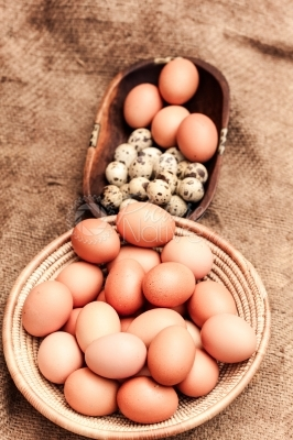 Quail eggs and chicken eggs