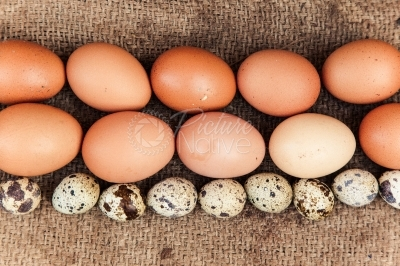 Quail eggs and chicken eggs arranged