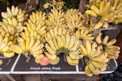 Ripe yellow bananas on display