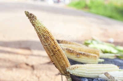 Roasted maize cob