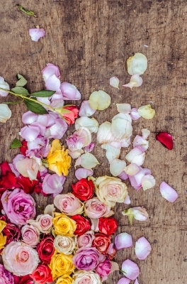 Rose flowers on a wooden background