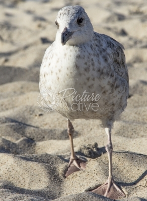 Sea gull at the beach