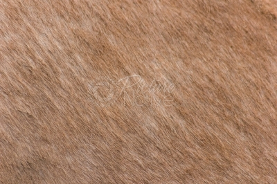 Texture of donkey fur