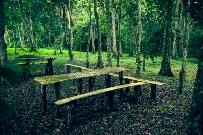 Wooden benches in a forest